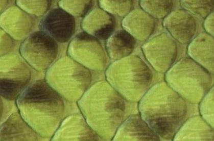 Exotic Python