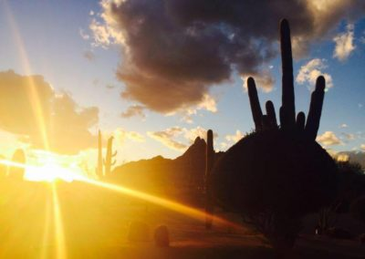 sunset with cactus